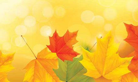 Harvest Festival-Oct 18